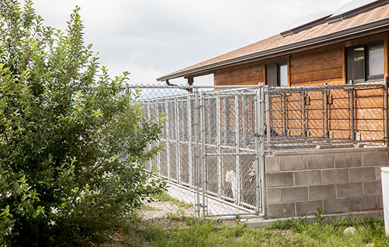 fenced boarding area outside Headwaters Veterinary Hospital