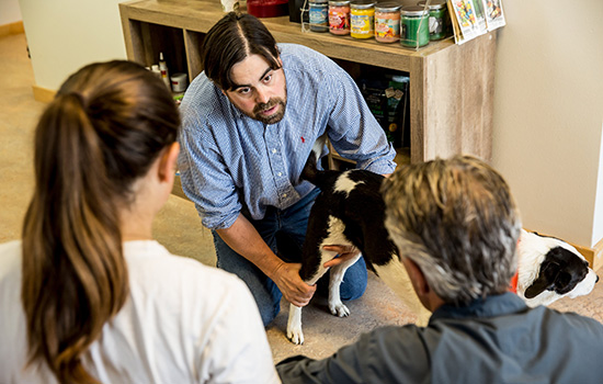 veterinarian examining a dog with owners